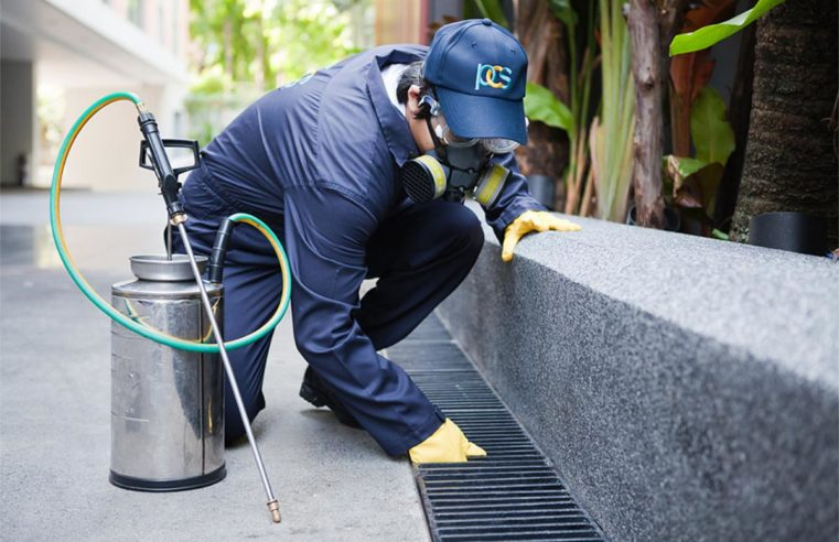 Flea Pest Management Service- An Occasional Service For Security And Consolation