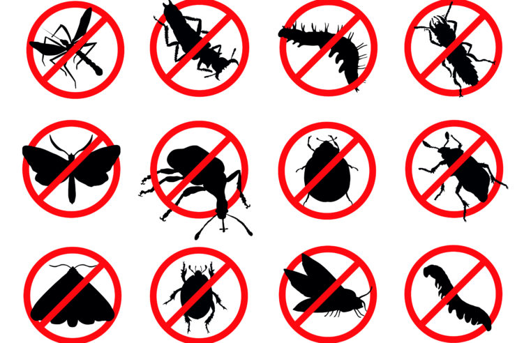 Pest Control & Useful Tips