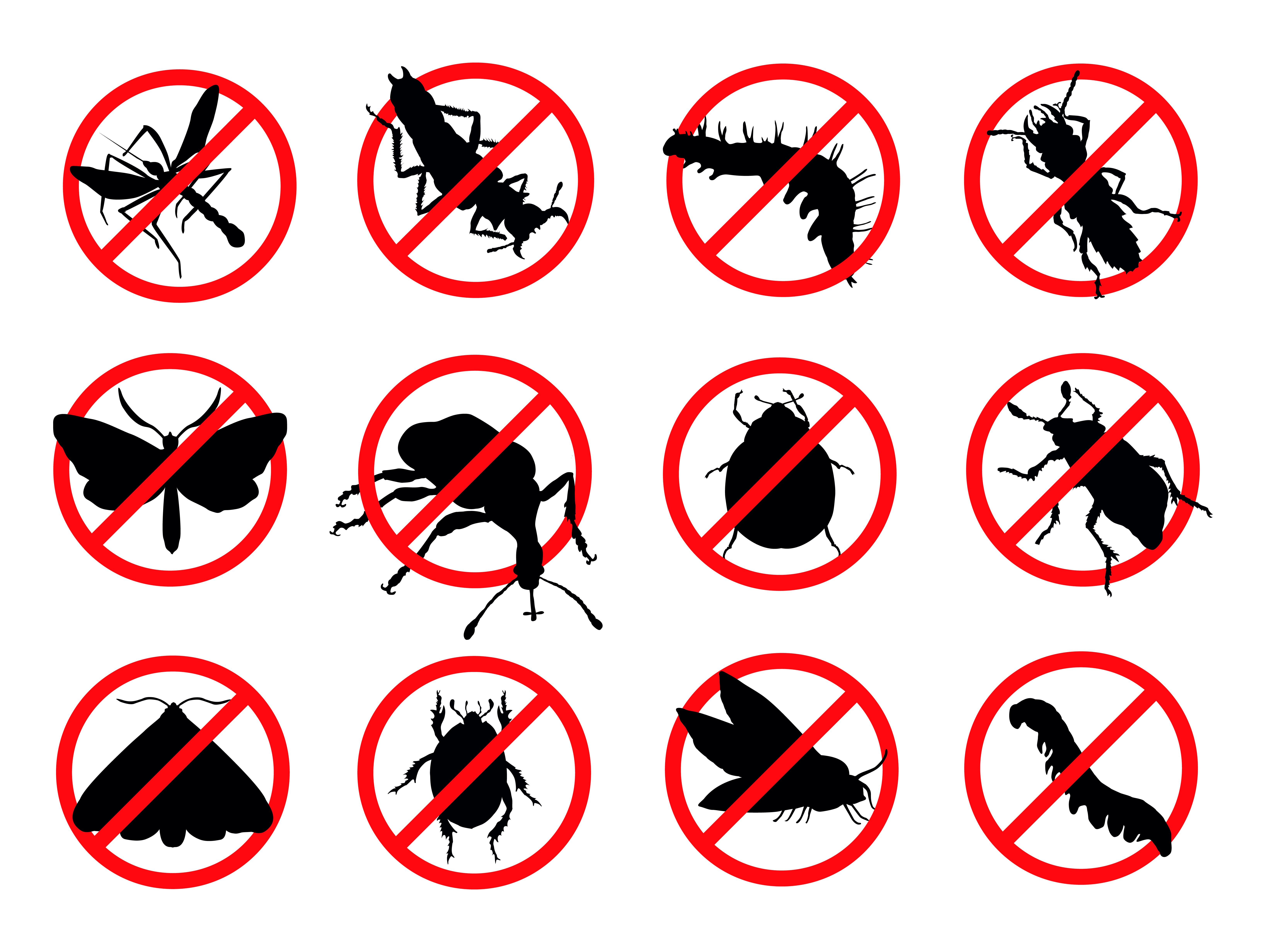 Pest Control & Useful Tips