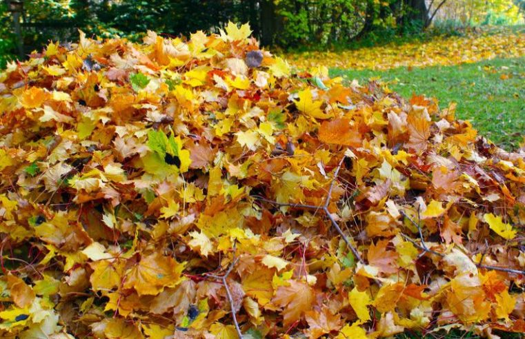 6 Top tips to prepare your lawn for winter