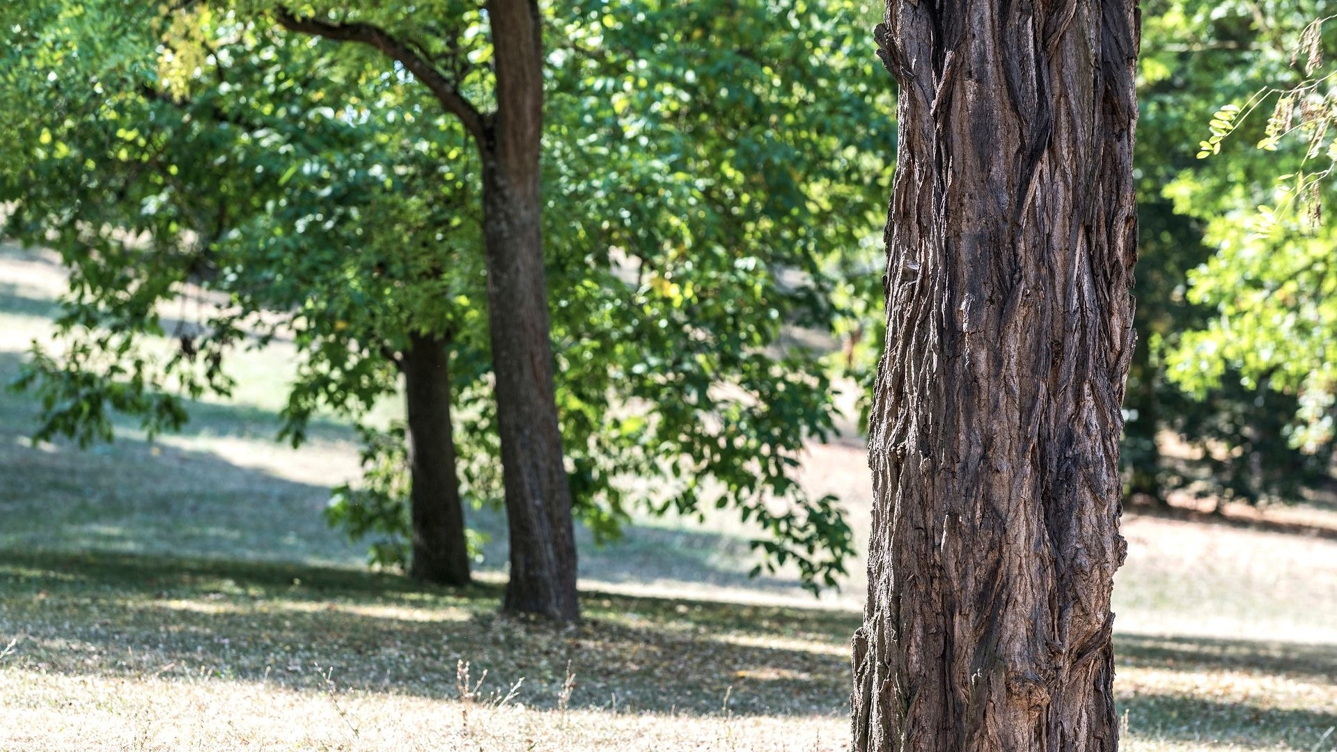 Why do the trees get stressed? How to cope with the stressed trees?