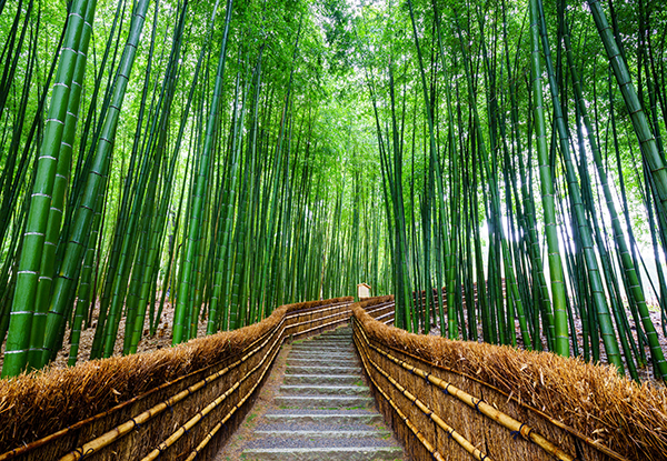 Try to use bamboo poles for a natural look in your surrounding